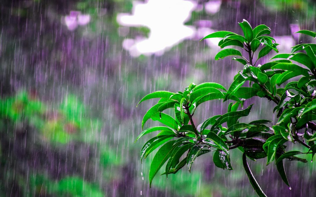 Heavy rain falling on green leaves with background of purple and green foliage