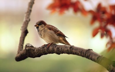 How Feeding Birds During the Autumn Months Promotes Their Survival
